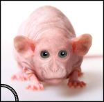 Hairless Harry by HumanDescent