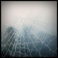 autumn caught in the web by D-u-D