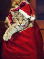 MerryXmas Cats..ok..Dogs too:P by blondepassion