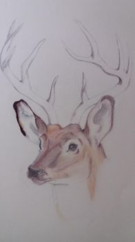Deer by cher-o-kee