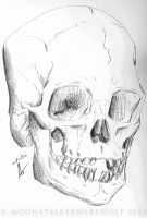 Human Skull Drawing by MoonstalkerWerewolf
