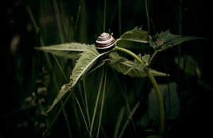 snail by seafoodmwg