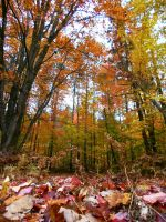 Fall in Northern Michigan by AG88