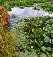 Waterlilies by Forestina-Fotos