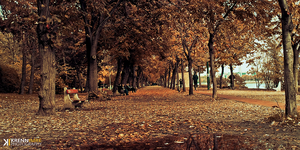 autumn walkway by piximi
