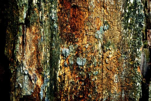 texture stock 251 by redwolf518stock