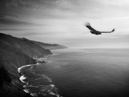 the flight of the Condor by VaggelisFragiadakis