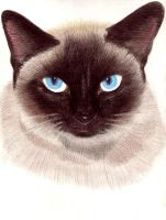 Siamese pet by athina13