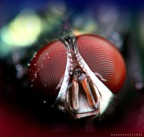 .::The Fly::. by Dinacecillia
