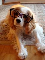 Nerdy Dog by pah-her-pul