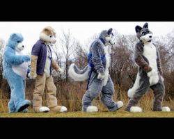 Furry Abbey Road by LycanDID
