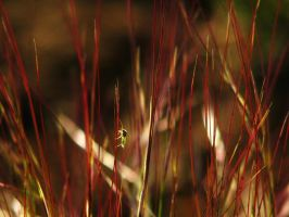 Bug on Red Grass by norif