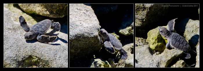 Turtle triptych 2 by Dominion-Photography
