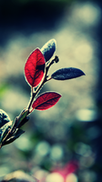Harbinger Of Light by atLevel1Alt