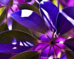 Purple plant life from mars by TaraLynnsPhotography