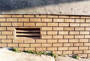 Live Between Bricks and Ground by etman