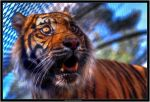 The Funny eye of the Tiger by Dr-Koesters