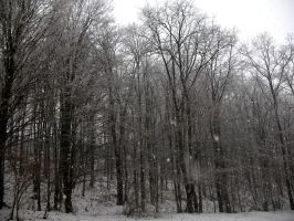 forest...first snow 2007 by Baton101