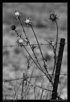 Behind Metal Thorns by Aderet