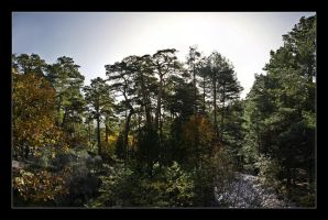 Colors of the Fall Pano by ColetasSoft