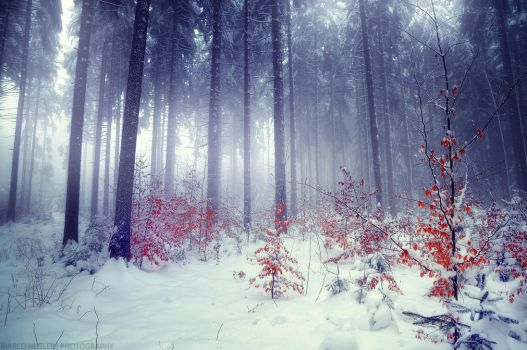 Silent Winter by MarcoHeisler