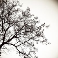 Tree Silhouette by tonydicks