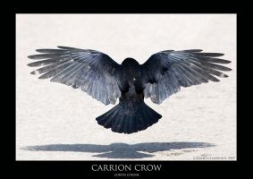 CORVUS.9 by THEDOC4