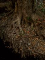 Roots of Time by phahn1986
