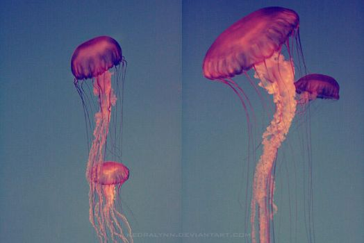 Jelly Movement 2 by kedralynn