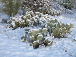Snow in Southern Arizona 2 by JZLobo