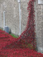 poppies at the tower by Sceptre63