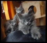 Kittens no. 2 by Cats-Paw