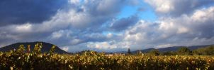 Yountville Vineyards by rebekahlynn-photo