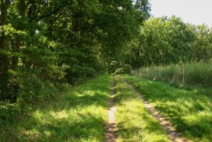Path along the Forest 2 by LuDa-Stock