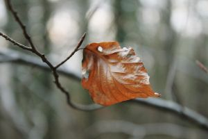 Last leaf Of 2009 by melemel