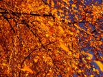 Wallpapers-Herbst2015-1600X1200px-V06112015005126 by Karoglan46