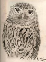 The Wise Old Owl by LaurenMichelleD