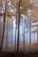Foggy Woods 3 by Jantiff-Stocks