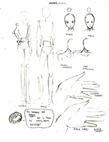 Male v. Female anatomic study by momohana2