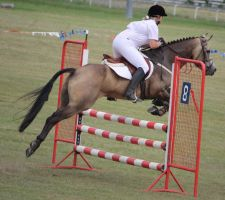 STOCK Showjumping 502 by aussiegal7