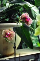 Orchids II by Esse-light