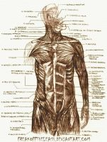 Human Anatomy by FreakOffTheLeash