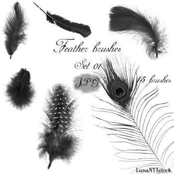 Feather brushes - set 01 - JPG by LunaNYXstock