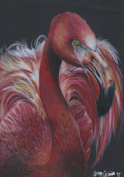 Flamingo by Ducks-with-Crayons