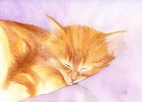 Kitty Cat Napping by ND4SPD911