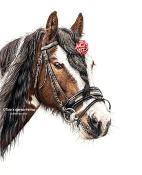 Gypsy vanner Portrait in colored pencil by Tinesdierportretten