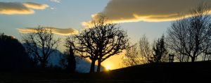 Tree in the sunset 1 by MarcZingg