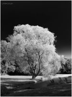 Black and White Tree by KonikPolski
