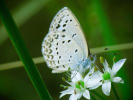 Snow Blue Glow Green by larksgar