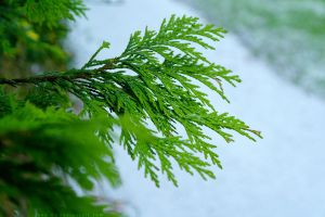 Green On White. by Jane-Rt